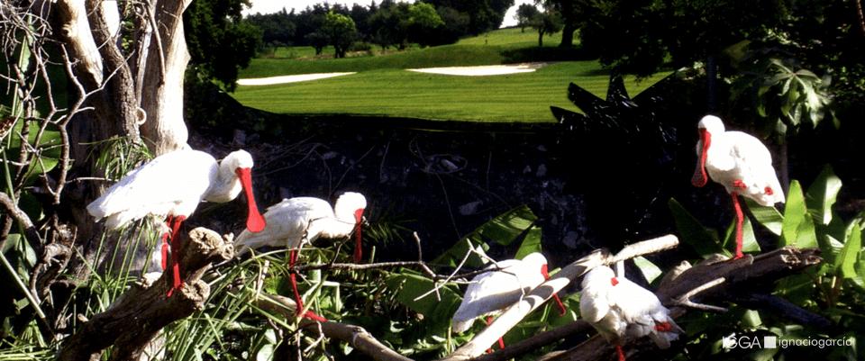 IGGA Arquitecto de campos de golf